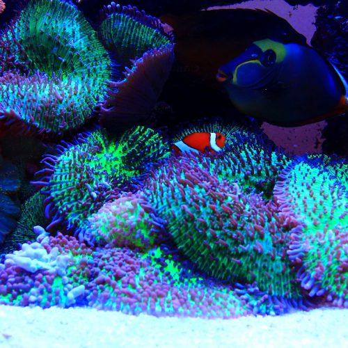 Aquarium-Pierre1
