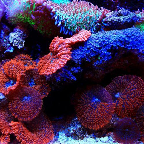 Aquarium-client2
